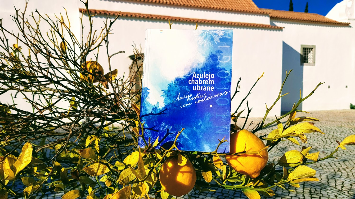 "Antologia  poezji polsko portugalskiej  ""Azulejo chabrem ubrane""  mój projekt 2020"