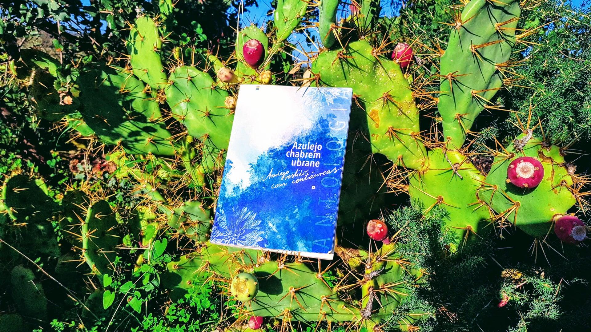 """BLOGS LITERÁRIOS -ANTOLOGIA REVISA """"AZULEJO VESTIDO COM CENTAUREAS"""""""